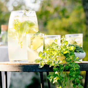 Sparkling Herb and Lemon SpritzerRecipe