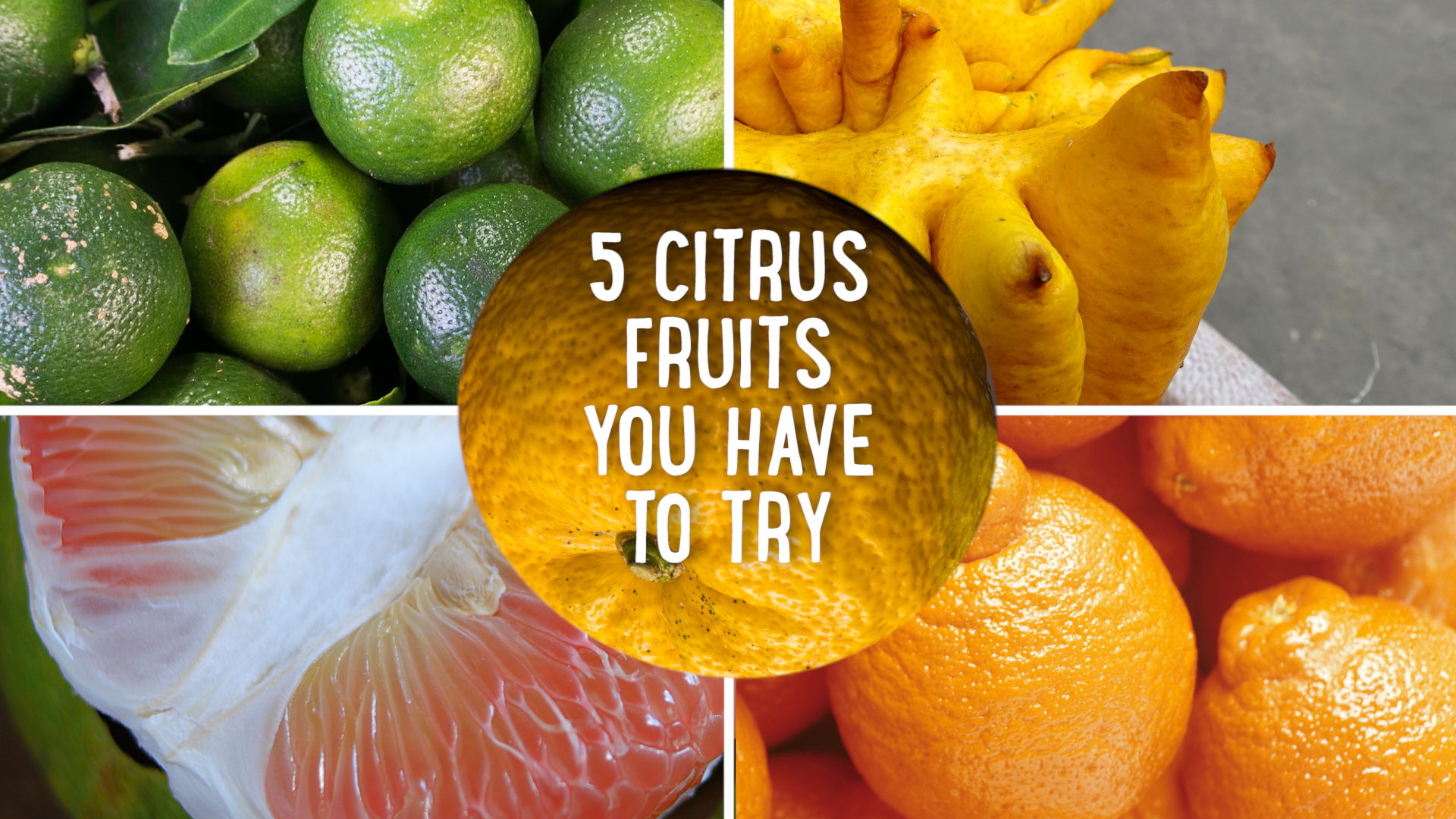 5 Strange Citrus Fruits You Have to Try STILL.jpg