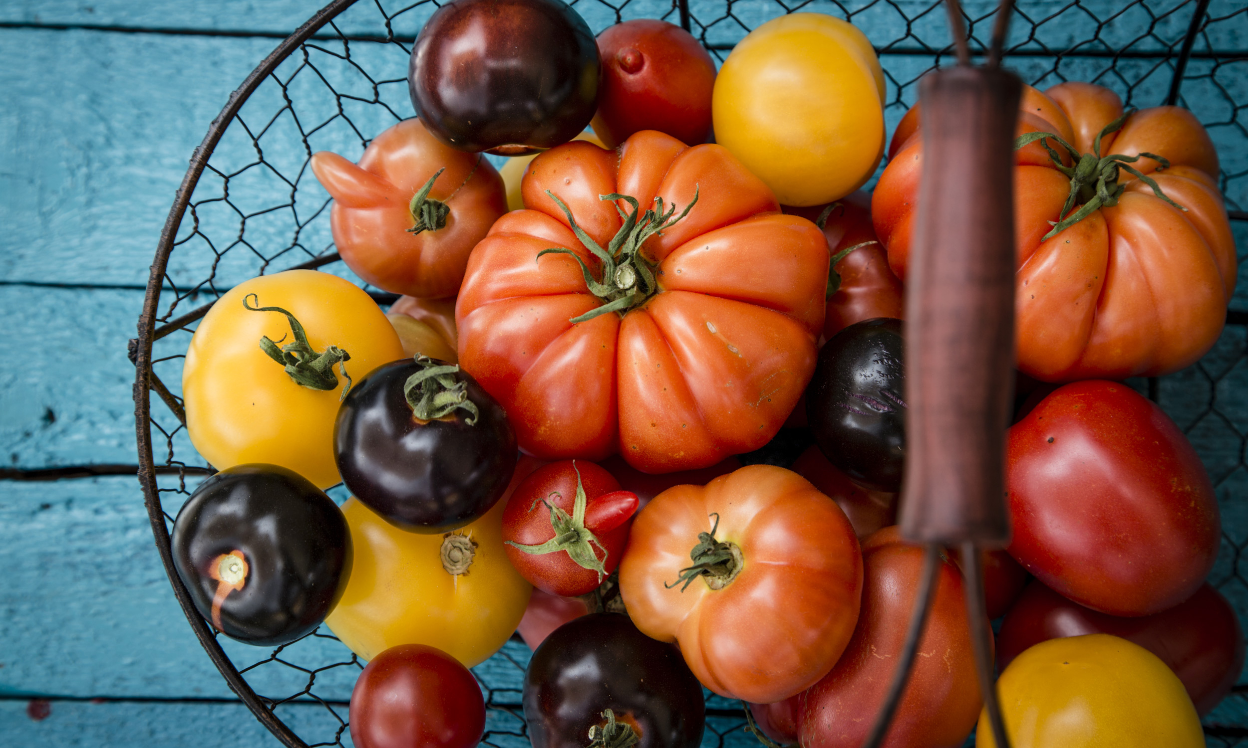 wire basket with heirloom tomatoes
