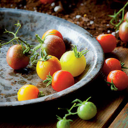 What is your secret for growing perfect, tasty tomatoes?