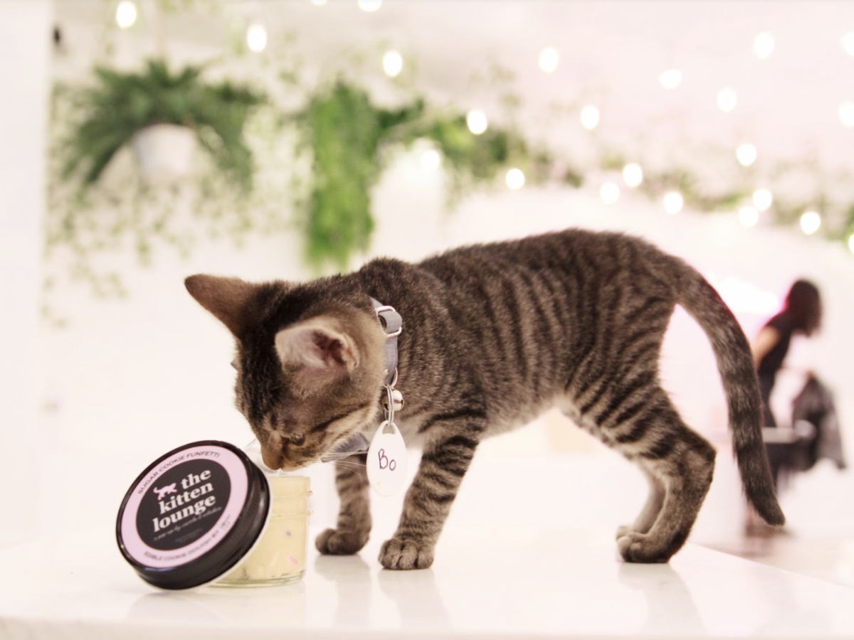 You Can Eat Cookie Dough and Play With Kittens at This Pop-Up Lounge