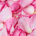 getty-pink-petal-image