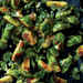 Caramelized Brussels Sprouts with Green Onions and Cilantro Recipe